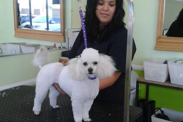 Pet Friendly Pupazzo Dog Grooming Xprss