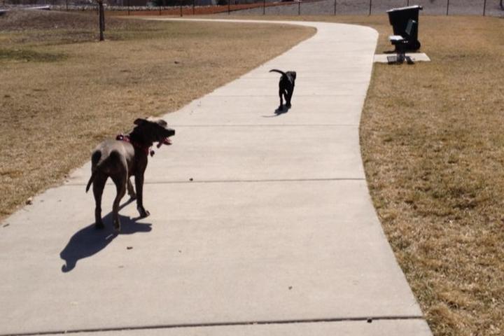 Pet Friendly Millrace Off-Leash Dog Park