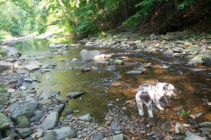 Pet Friendly West Mill Creek Park