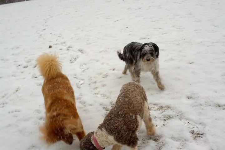 Pet Friendly Harford Park Off Leash Area