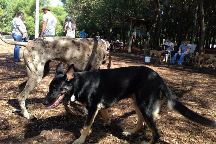 Pet Friendly Millbrook Exchange Dog Park