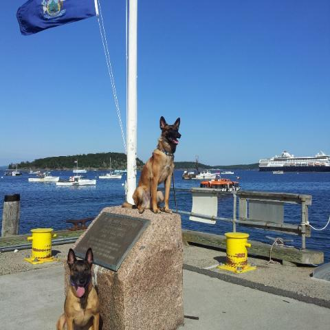 Pet Friendly Vacation Rentals Near Myrtle Beach