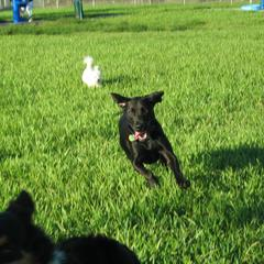 Dog Park Broward
