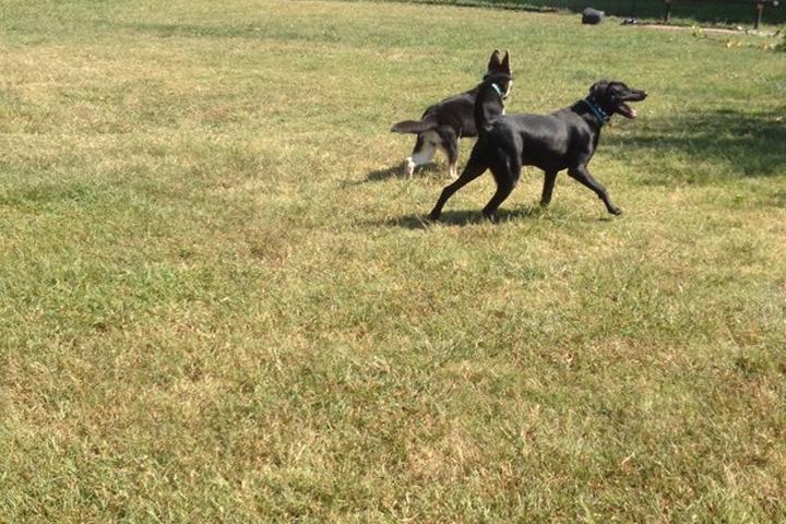 Pet Friendly Fido Field Dog Park