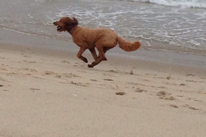 Pet Friendly Skaket Beach