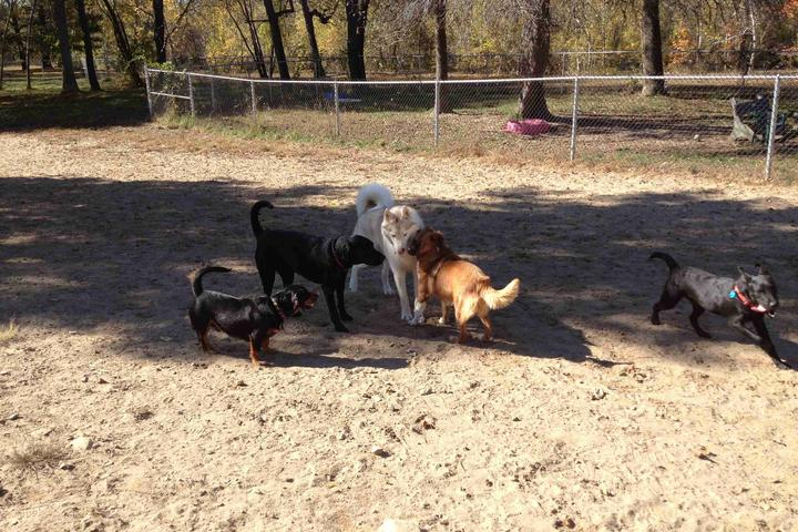 Pet Friendly Terrill Park Dog Park