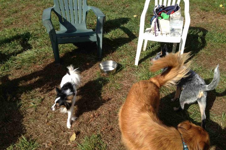 Pet Friendly New Milford (Candlewoof) Dog Park