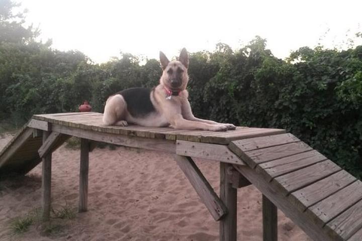 Pet Friendly Nickerson Beach