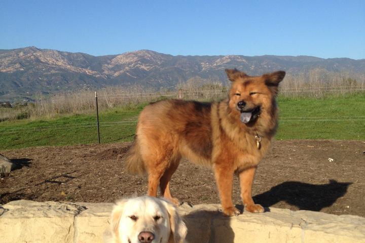 Pet Friendly Dog's Best Friend