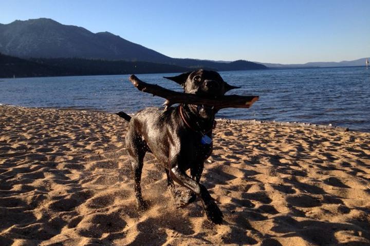 Pet Friendly Kiva Beach