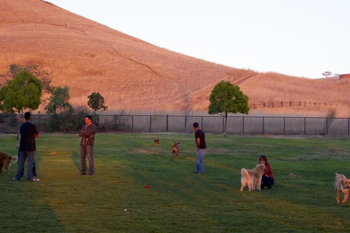 Pet Friendly Dog Park at Ed Levin Park