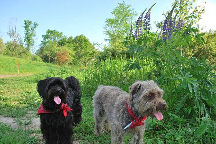 Pet Friendly Capisic Pond Park