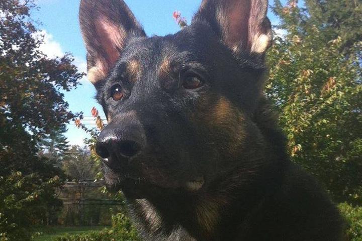 Pet Friendly D & D Dog Training Services, LLC