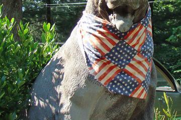Pet Friendly Adopt-A-Dog, Inc.