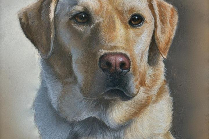 Pet Friendly Imagine Art Custom Pet Portraits