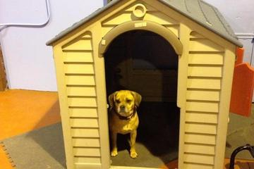 Pet Friendly Happy Hounds Doggie Day Care, LLC