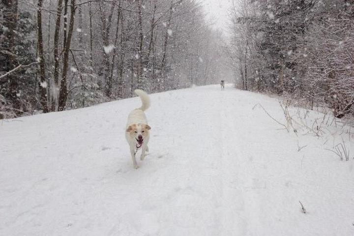 Pet Friendly Dover Community Trail