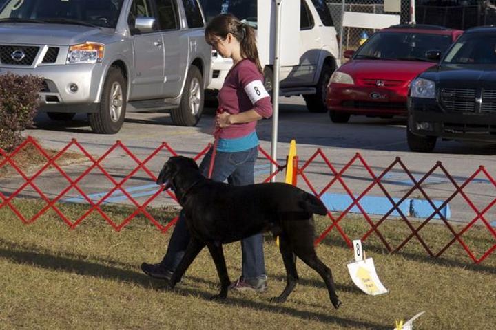 Pet Friendly Z&E Canine Manners