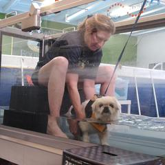 Canine Physical Therapy and Rehabilitation Underwater Treadmill