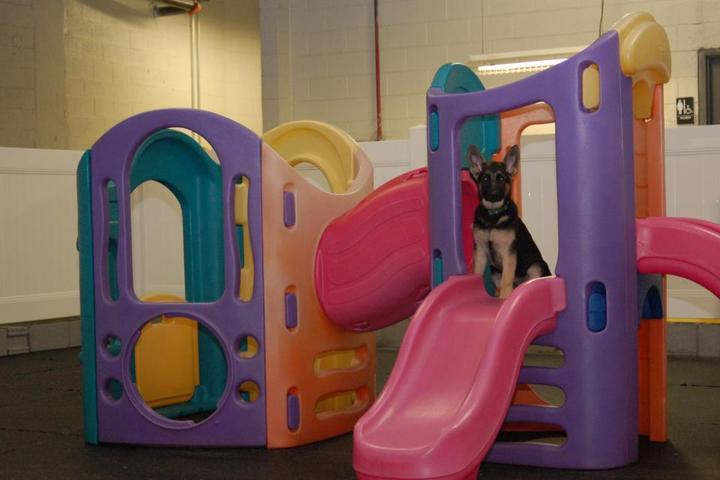 Pet Friendly Club Fido Daycare & DogSports Training Center