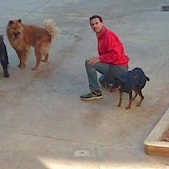 Dogs enjoying themselves while at the kennels