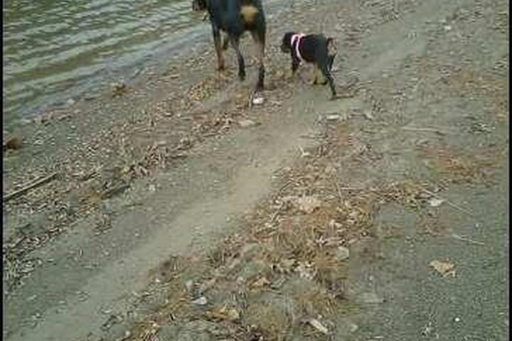 Pet Friendly Charles Mill Lake Park and Campgrounds