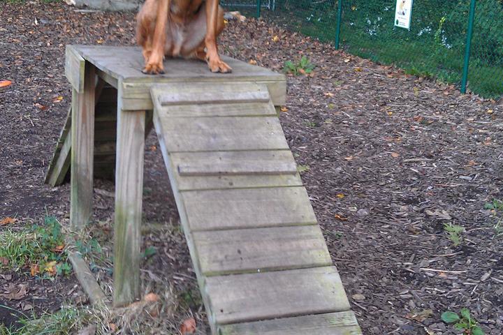 Pet Friendly Branford Dog Park