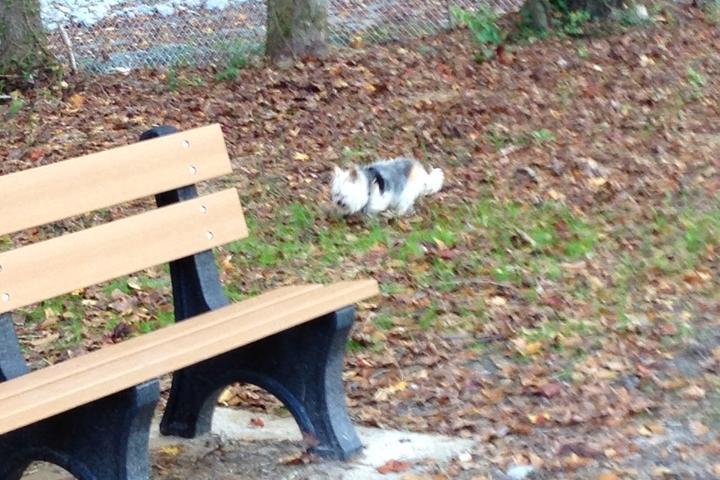 Pet Friendly Fuquay Varina Dog Park