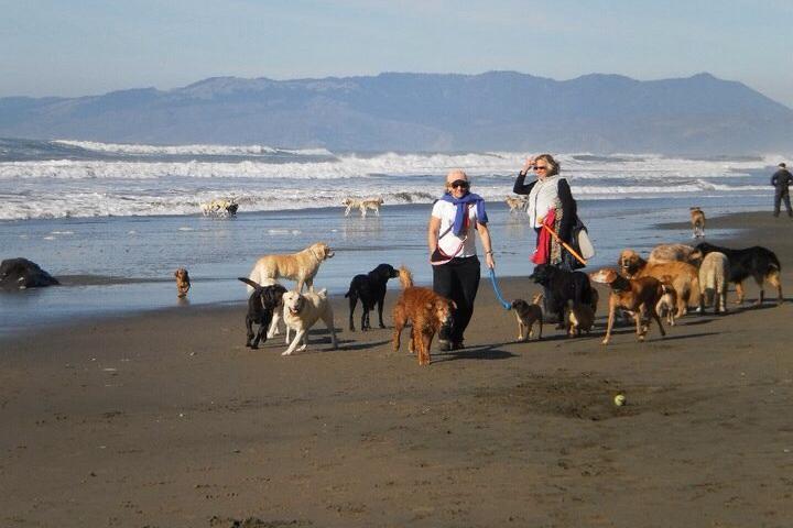 Pet Friendly Fort Funston Doggie Beach