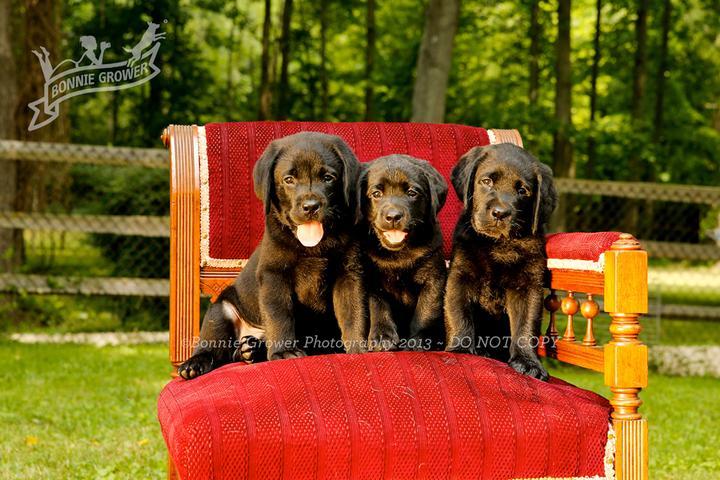 Pet Friendly Bonnie Grower Pet Photography