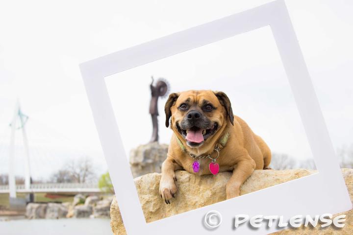 Pet Friendly Petlense Photography