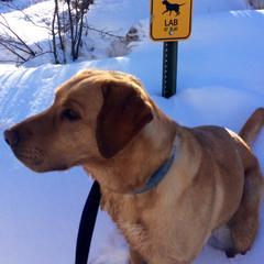 Hank on Spring Break in Aspen