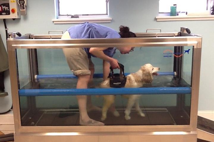 Pet Friendly All Pets Vet Hospital
