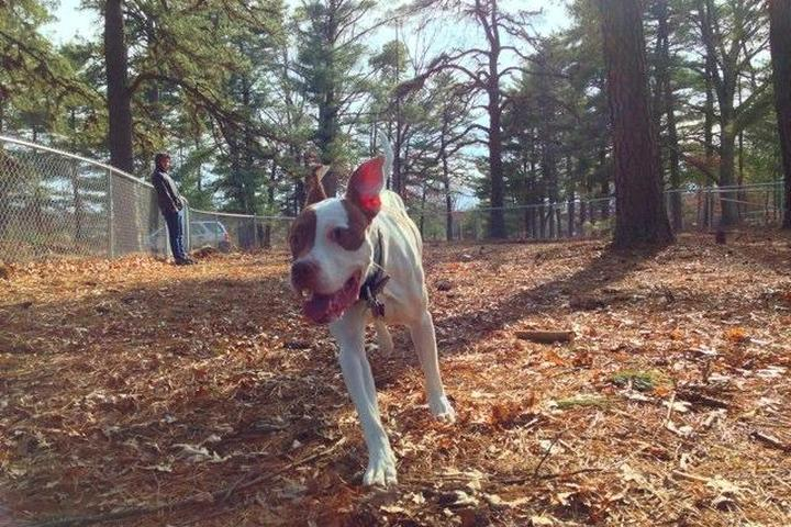 Pet Friendly Westfield Dog Park