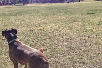Pet Friendly Howard Heuston Off Leash Dog Area