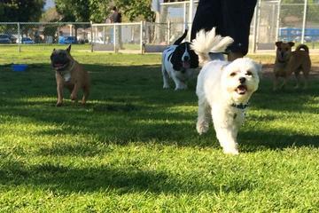 Pet Friendly Del Norte Dog Park