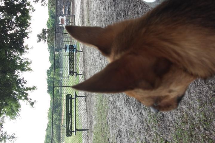 Pet Friendly DiOGi Park at Loyce E. Harpe Park