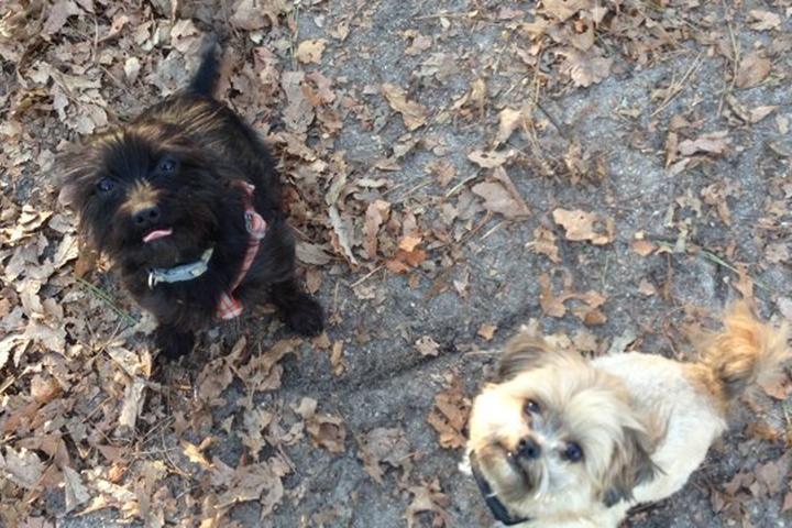 Pet Friendly Howell Bark Park