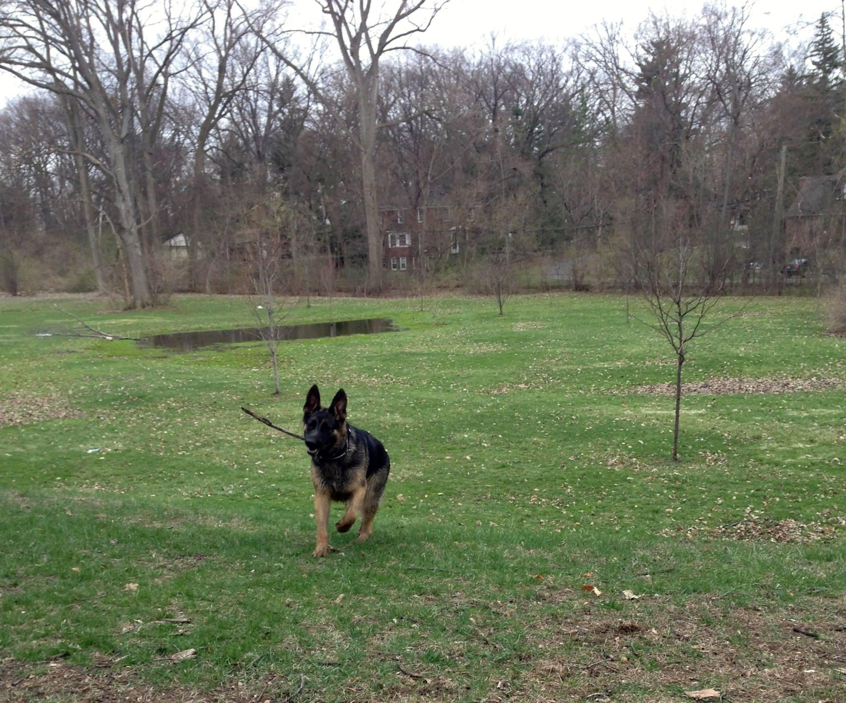Dog Park Royal Oak Mi