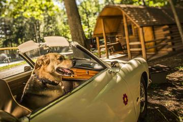 Pet Friendly Delaware Water Gap / Pocono Mountain KOA