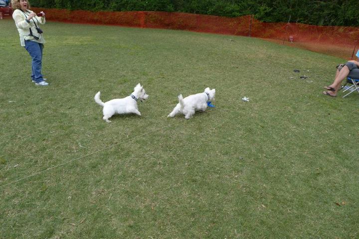Pet Friendly KSC Lure Coursing LLC
