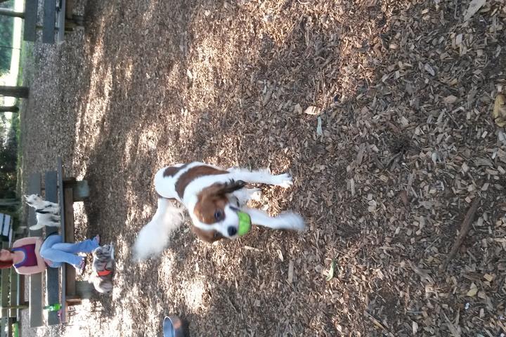 Pet Friendly Walsingham Paw Playground