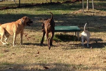 Pet Friendly Heurich Dog Park