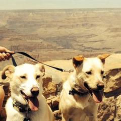 Jax and Rocky do the Grand Canyon