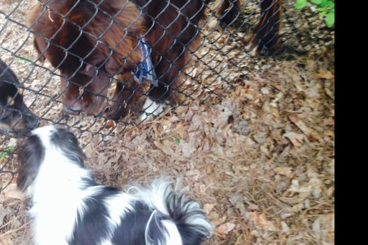 Pet Friendly Piney Wood Dog Park