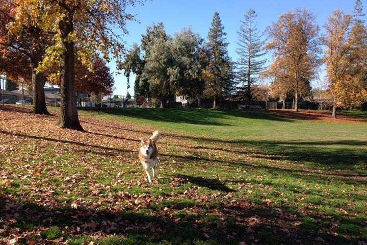 Pet Friendly Vinewood Dog Park