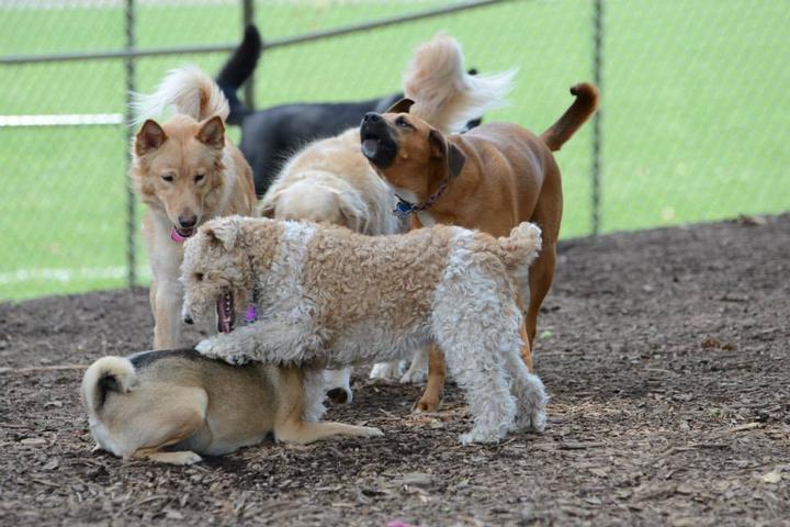 Pet Friendly Olney Manor Recreational Park