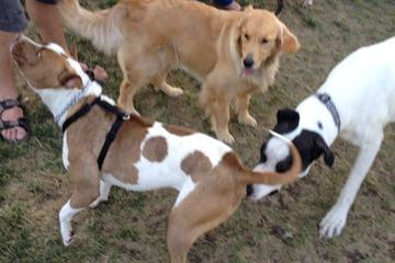 Pet Friendly Lathrop dog park