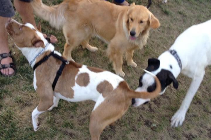 Pet Friendly Lathrop dog park