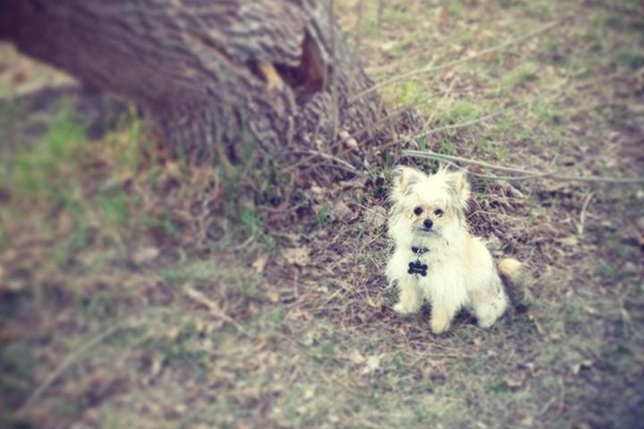 Off-Leash Dog Parks in Manitoba - Bring Fido